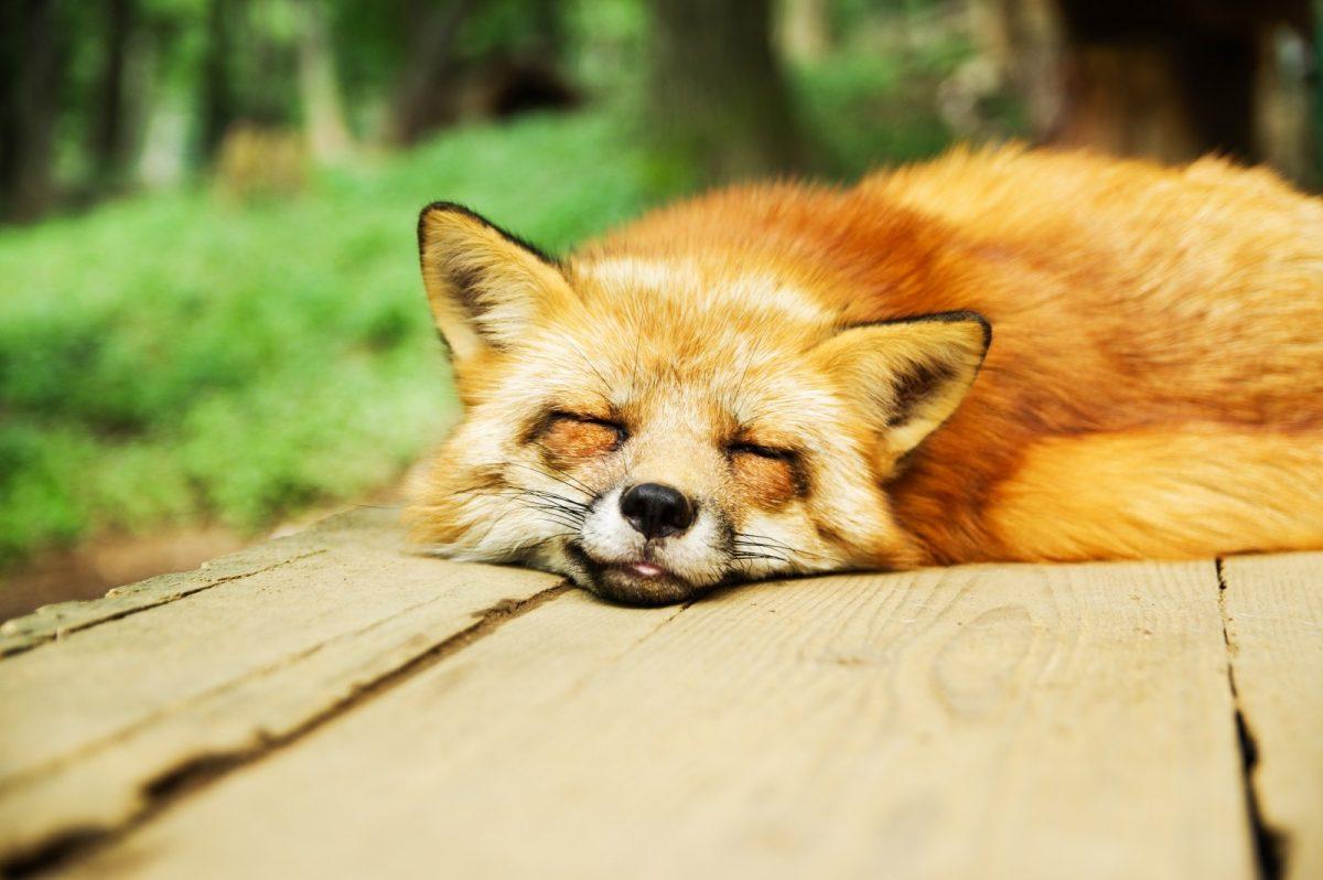 寝 寝 スピリチュアル て も も て 眠い